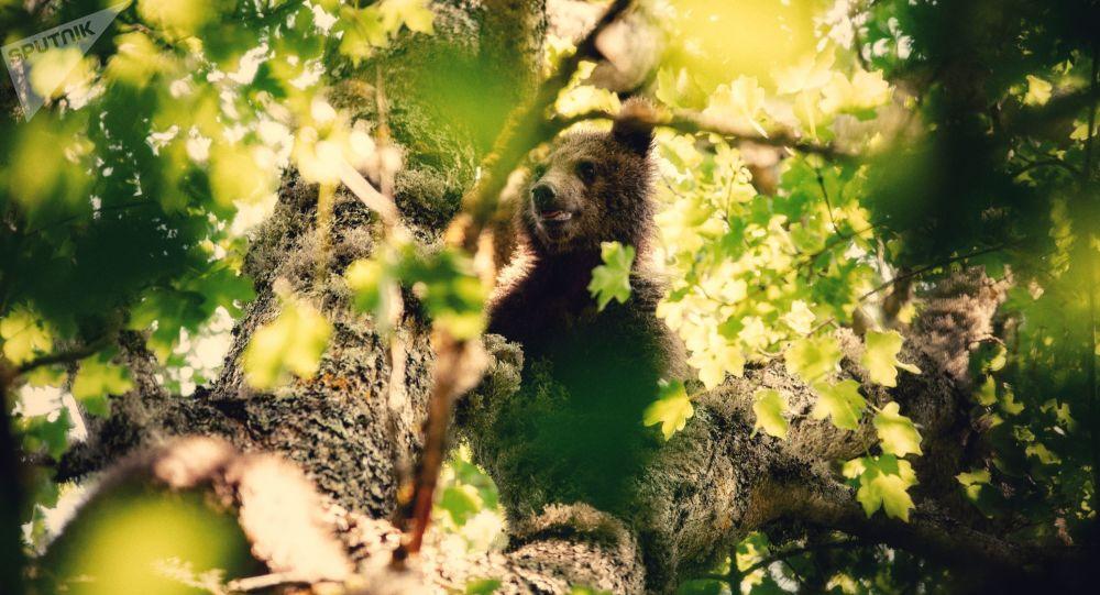 Медвежат-найденышей выпустили на волю