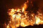 Греция: Местные жители на Эвии помогают в борьбе против лесных пожаров