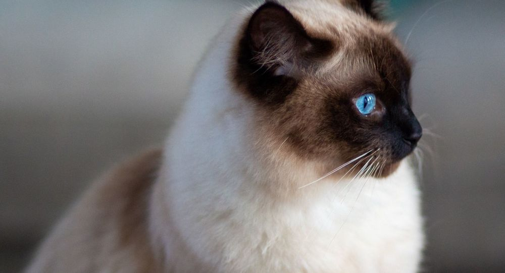 Вообще всё равно: кот демонстрирует максимальный пофигизм