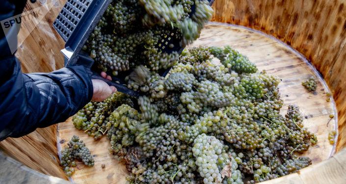 Праздник сбора урожая в Цхинвале