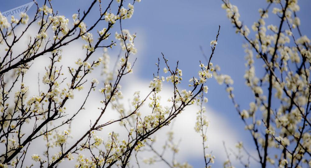 Весна в Южной Осетии