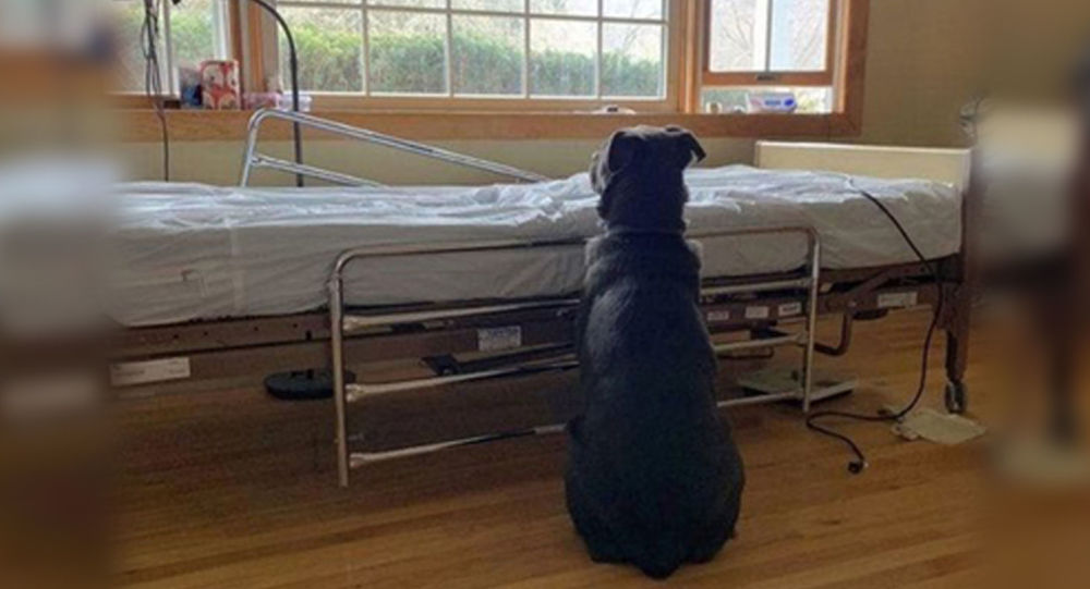 Верный пес остался ждать умершего хозяина у больничной койки