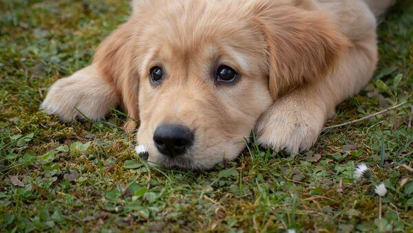Печальная собака - Sputnik Южная Осетия
