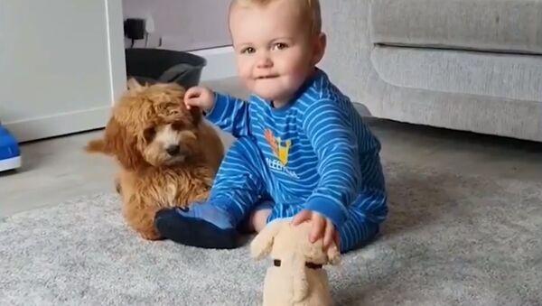 Собачка, ребенок и игрушка - Sputnik Южная Осетия