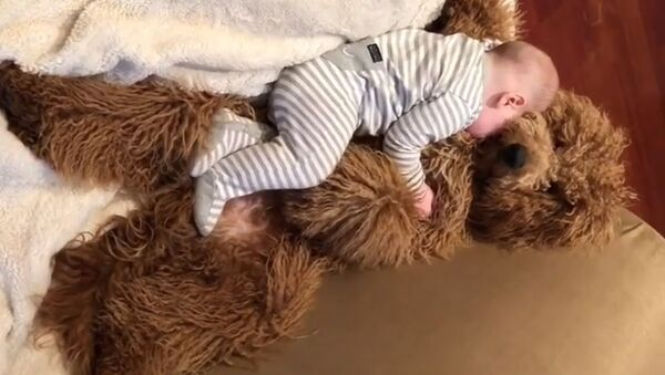 Малыш и пес - Sputnik Южная Осетия