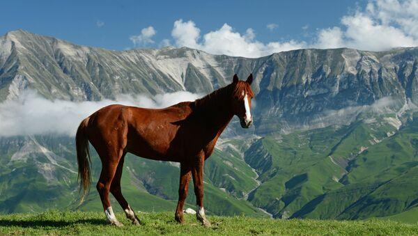 Лошадь в горах - Sputnik Южная Осетия