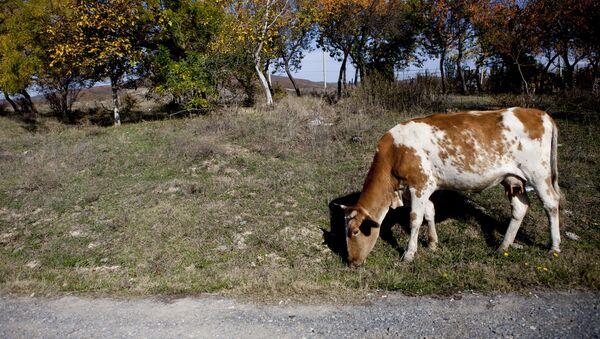 Осетинская осень: зовет и уносит - Sputnik Южная Осетия