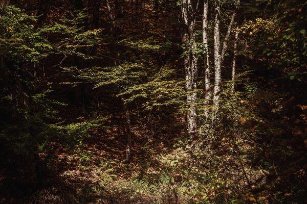 Осенний лес.  - Sputnik Южная Осетия