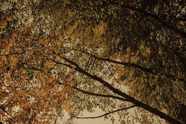 Осень.  - Sputnik Южная Осетия