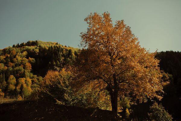 Осень в горах Осетии.  - Sputnik Южная Осетия