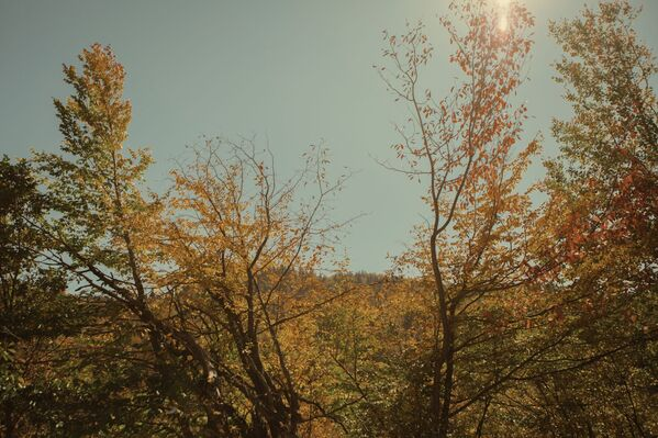 Осень в горах Южной Осетии.  - Sputnik Южная Осетия