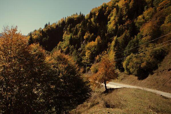 Осень в горах.  - Sputnik Южная Осетия