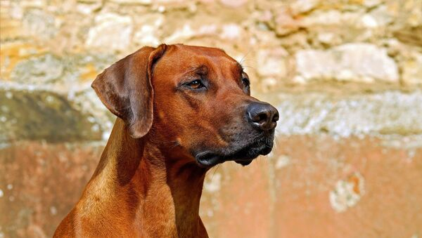 Собака - Sputnik Южная Осетия