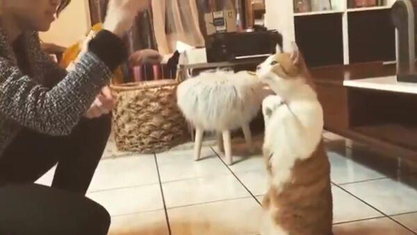 Дрессированный кот научился выполнять трюки не хуже собаки - Sputnik Южная Осетия